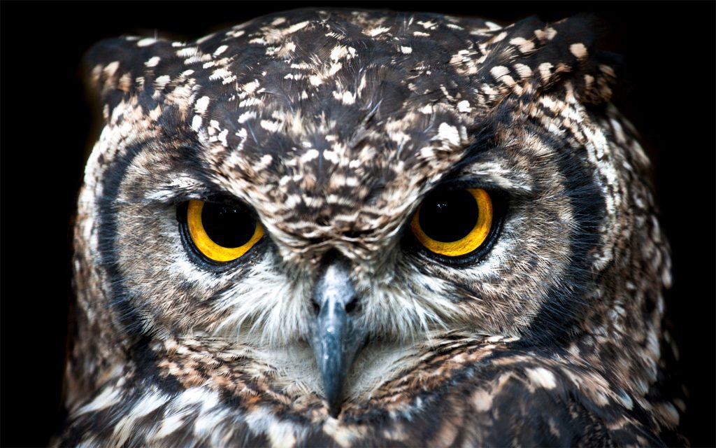 Owl's face - representing wisdom and experts - the real giants.