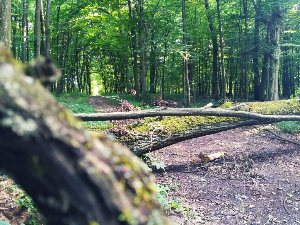 Image of a wooded path blocked by fallen tree trunks, symbolizing the difficult path to travel in solving the tough problems on campus.