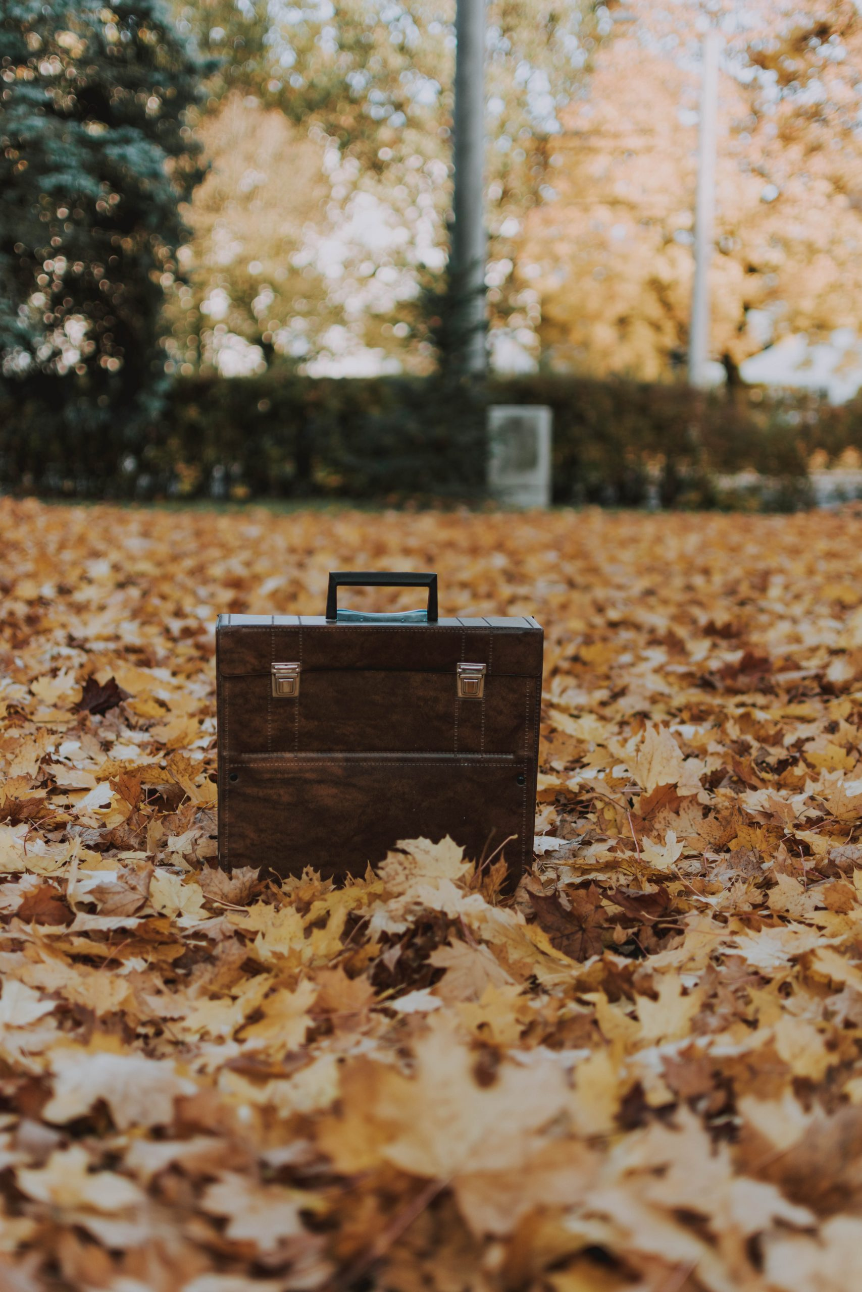 Briefcase On Leaves - symbolizing consulting